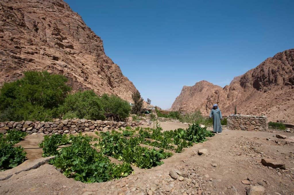 Jardim no deserto