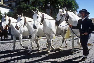 Desfile de cavalos andaluzes nas Festas de Outono de Jerez de la Frontera