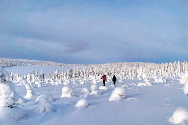 O branco domina a paisagem no norte da Finlândia