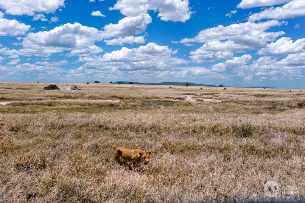 Savannah Serengeti