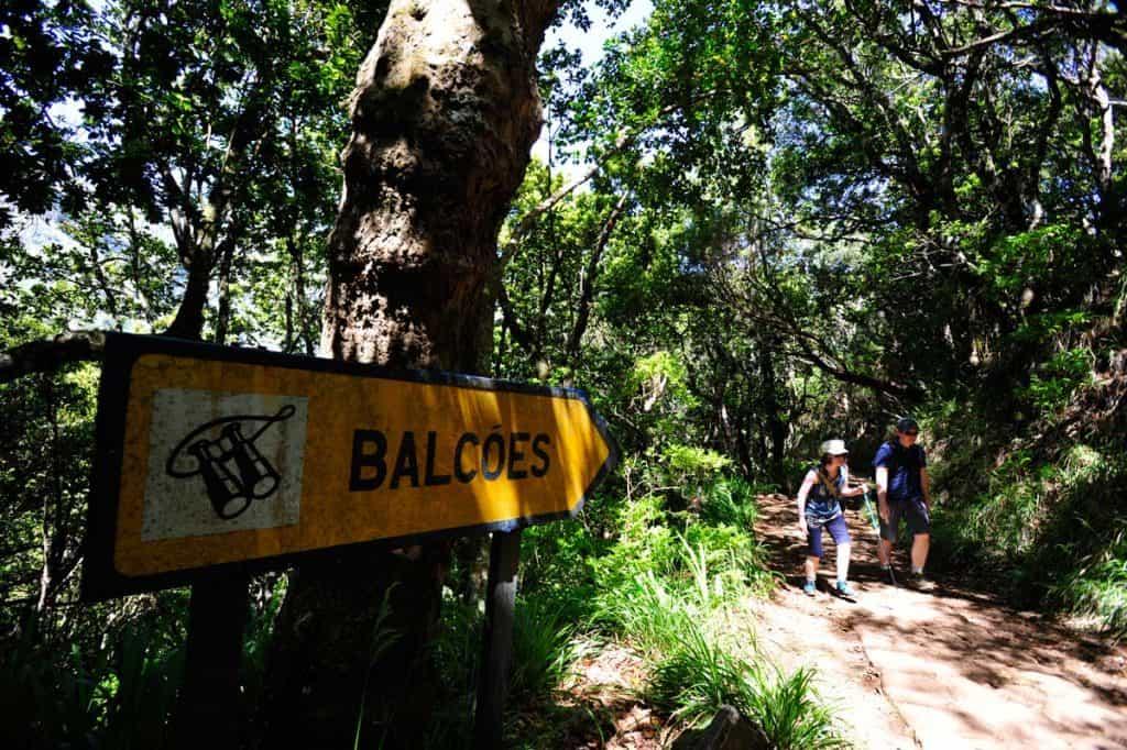 Paukščių stebėjimas Madeiroje: Levada dos Balcões