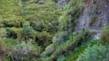Um passeio pelo interior verde da Madeira