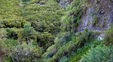 Levadas di Madeira