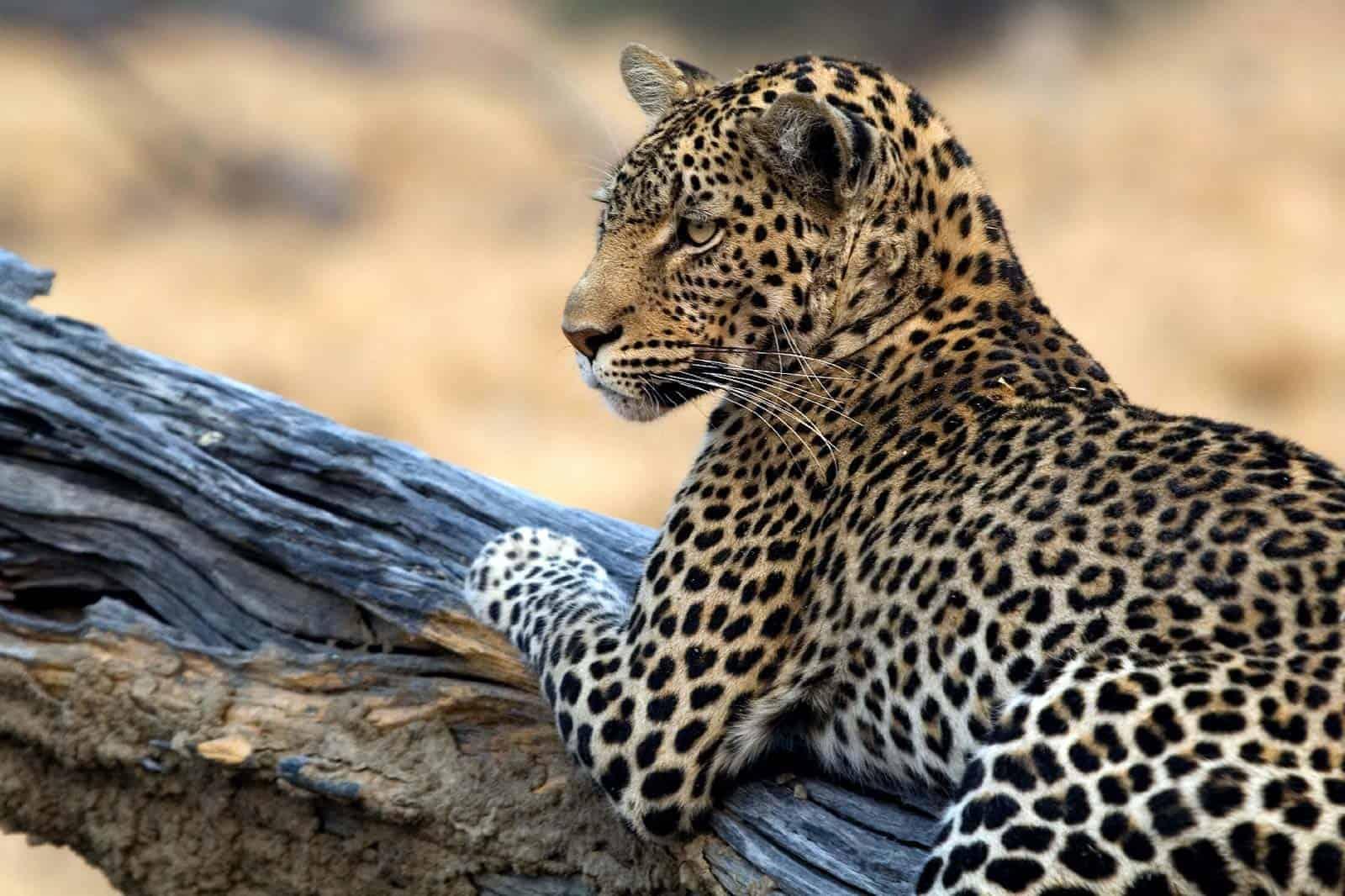 Parque Nacional Lower Zambezi, Zâmbia
