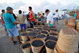Todos os dias, antes do nascer do sol, cestos com açaí chegam de barco ao Igarapé das Mulheres, Macapá