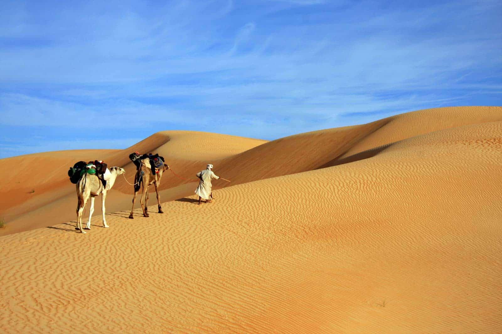 Cammelli nel deserto del Sahara, in Mauritania