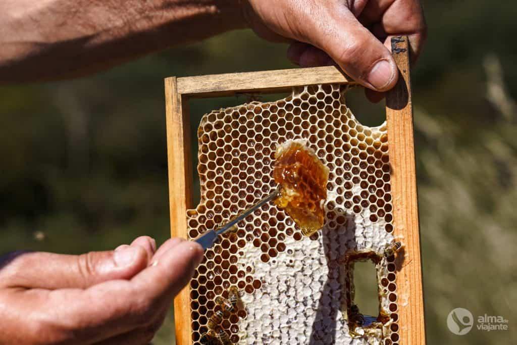 Mel das abelhas buckfast
