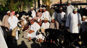 O incrível mercado de cabras de Nizwa