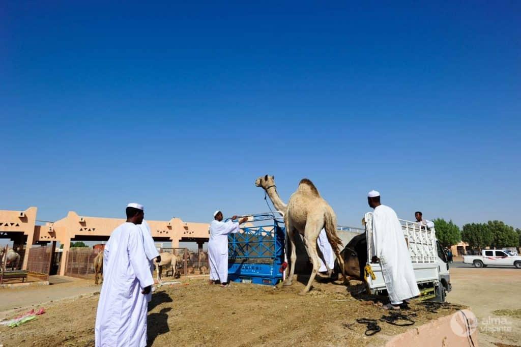 Mercado de camelos Al Ain, Abu Dhabi