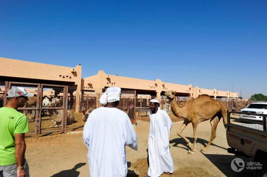 Turistas no mercado de camelos
