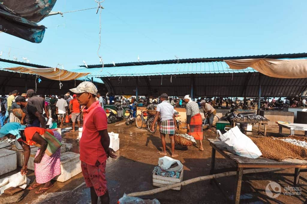 Mercado de peixe em Negombo, Sri Lanka