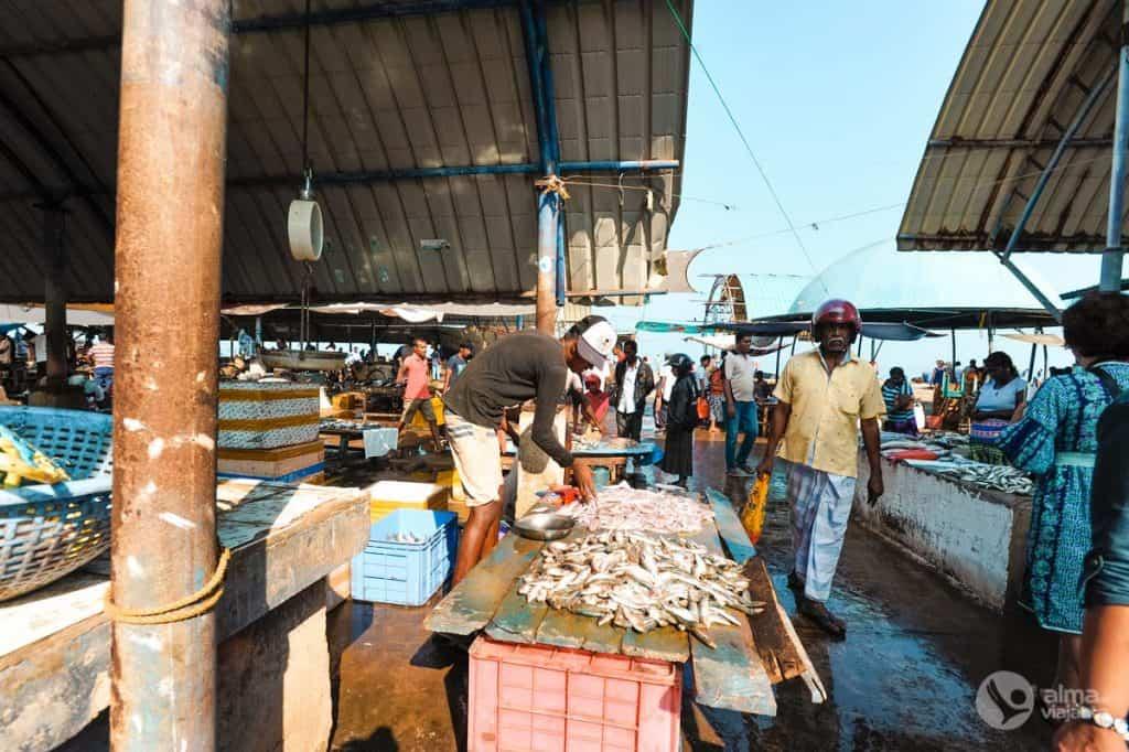 Mercado de peixe, Negombo