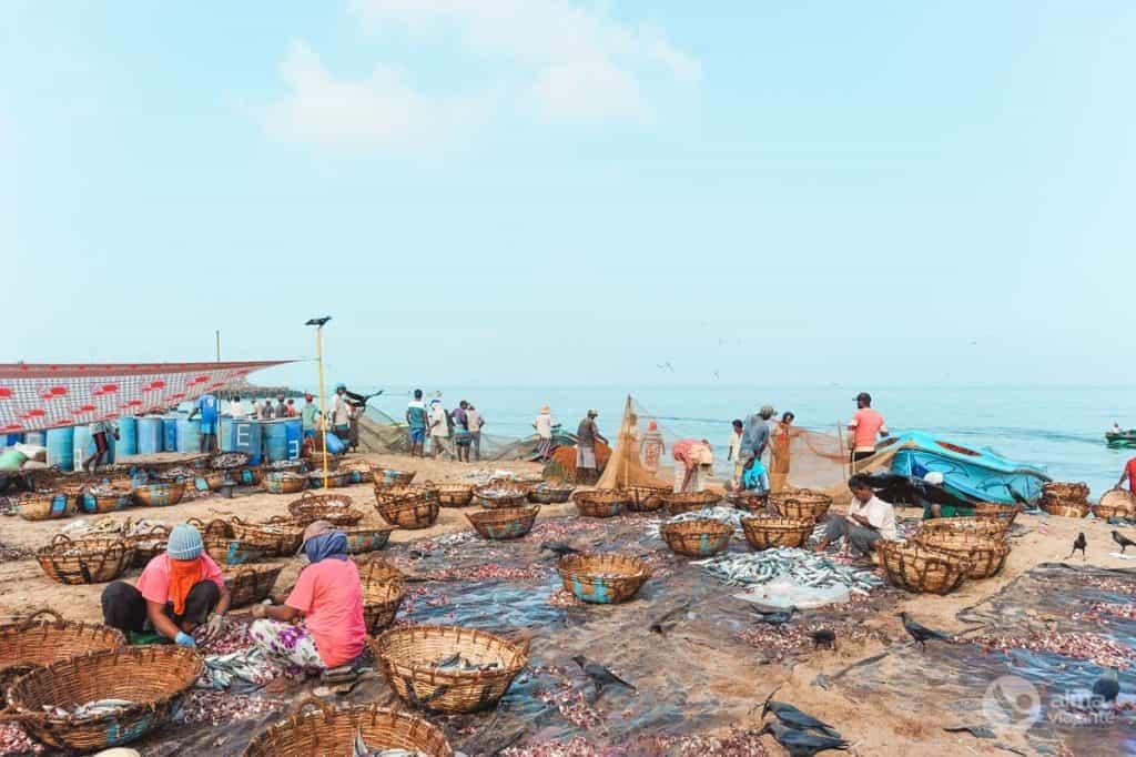 Rybí trh Negombo, Srí Lanka