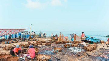 O mercado de peixe de Negombo