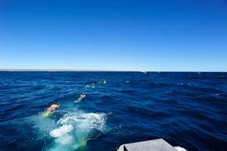 Nadando ao encontro dos tubarões-baleia