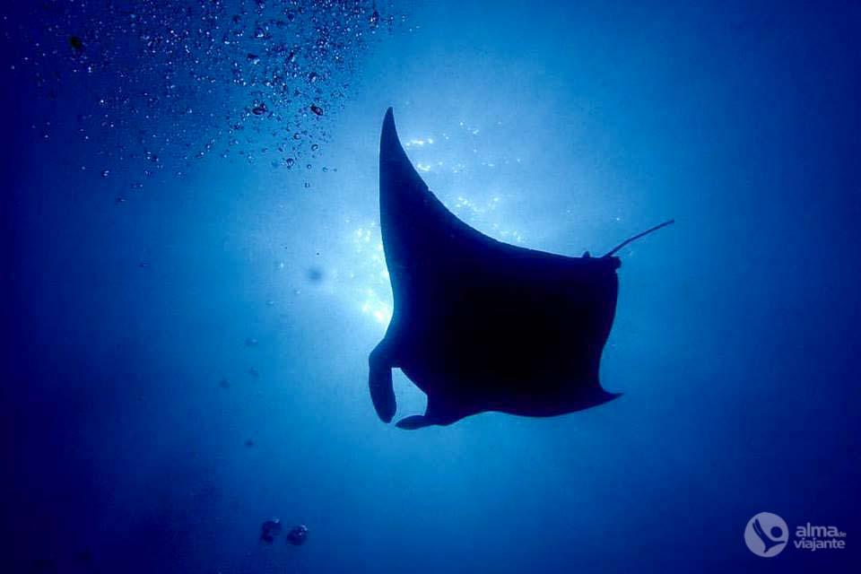 Mergulhar nas Maldivas
