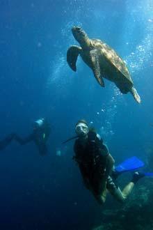 Mergulho próximo da ilha Sipadan, Bornéu