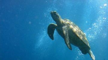 Mergulhar em Sipadan, paraíso subaquático