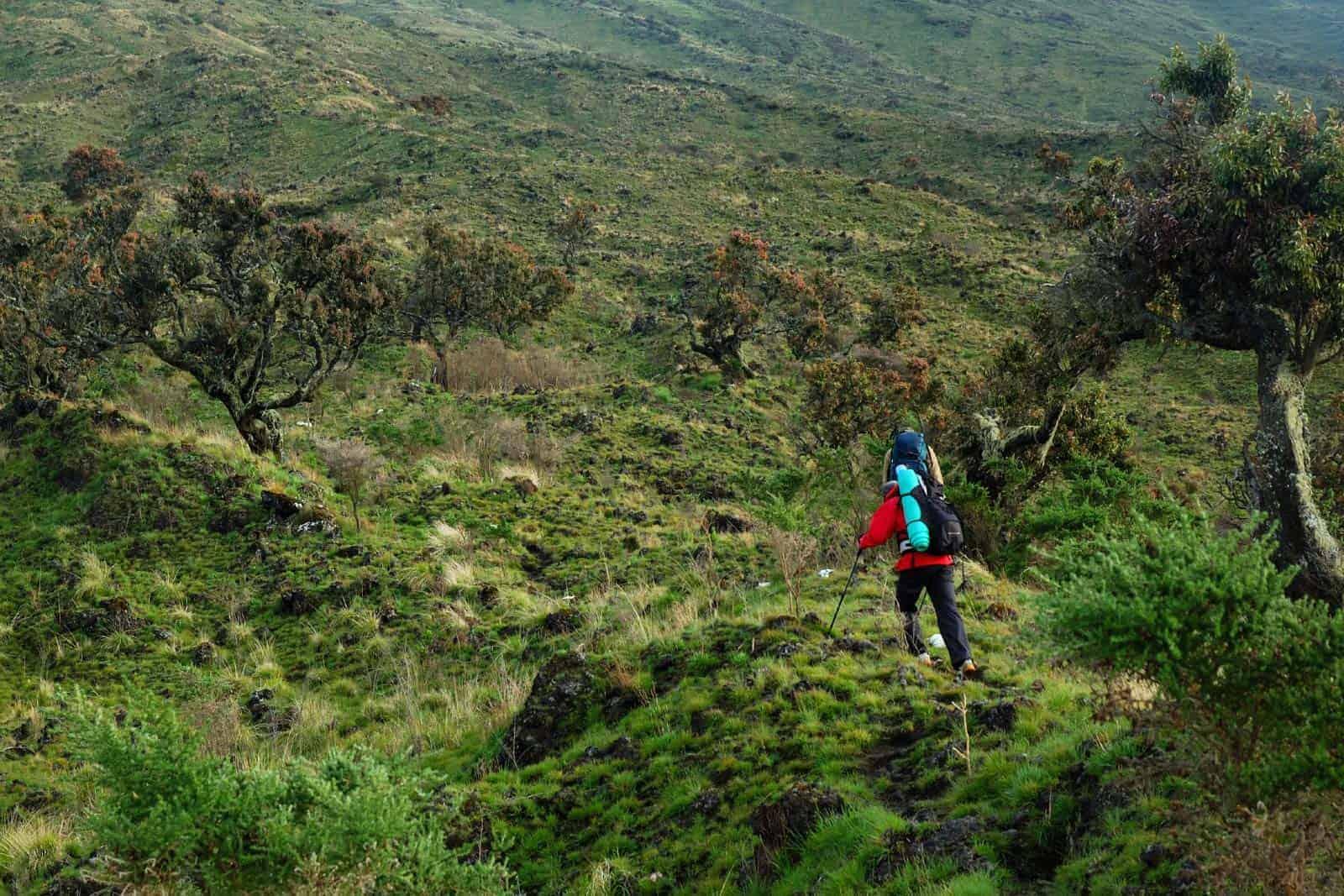 Trekking ant Kamerūno kalno