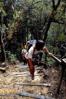 Caminhada para o monte Kinabalu