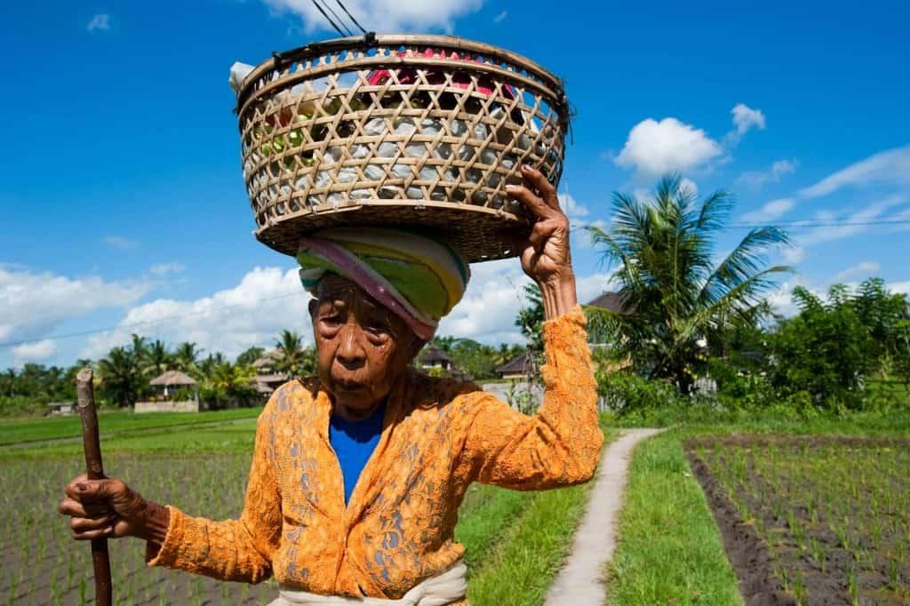 Mulher indonésia nos arrozais de Ubud