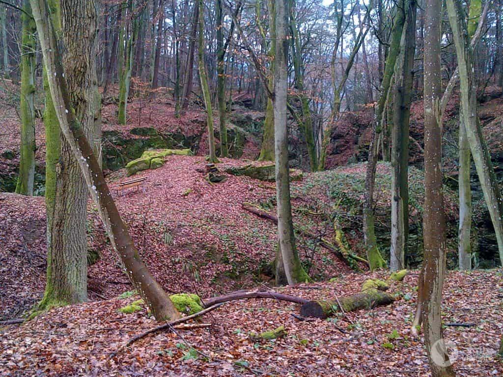 Berdorf Bölgesindeki Ormanlar