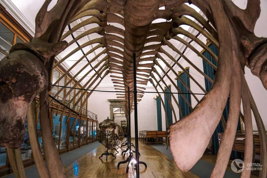 Galeria de História Natural no Museu da Ciência, Coimbra