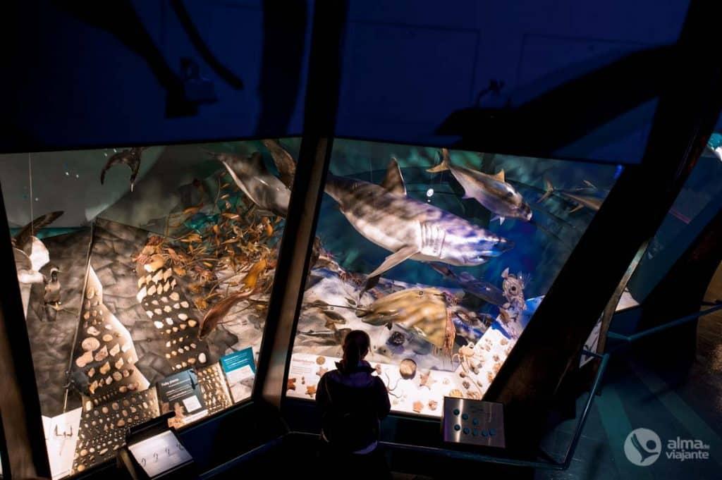 Lietas Wellington: apmeklējiet Te Papa muzeju