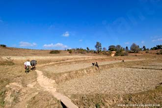 Campos de arroz em Kalaw
