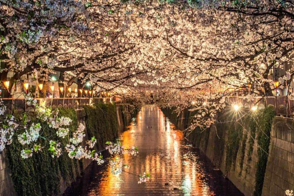 Sakura em Nakameguro, Tóquio