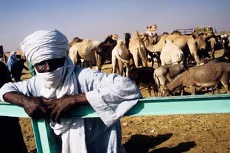 Tuareg í Agadez, Níger