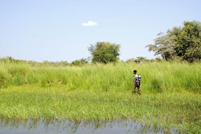 Ung móðir gengur á bökkum handleggs Okavango Delta