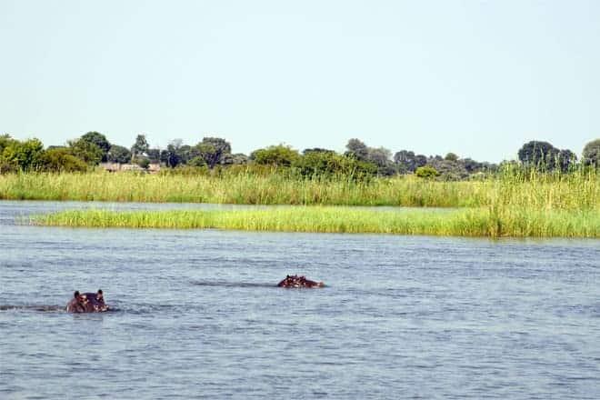 Okavango Delta er náttúrulegt búsvæði fyrir marga flóðhesta