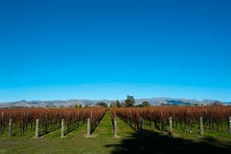 Uus-Meremaa veinimaastik