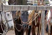 Cavalos numa fazenda de Bonito, Mato Grosso do Sul, Brasil