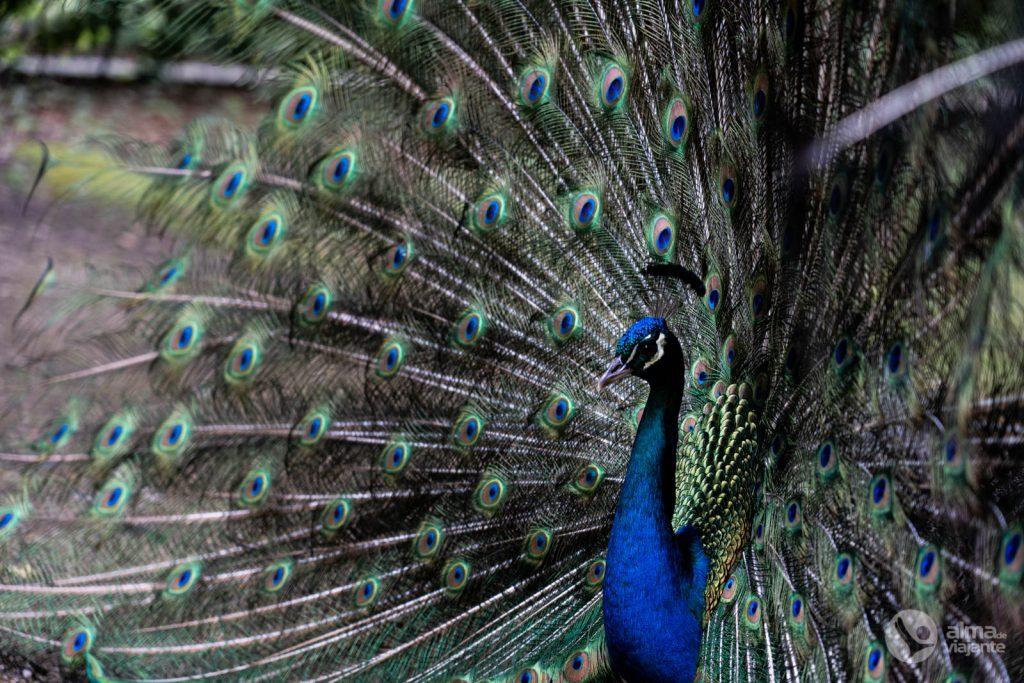 Viseu Cidade-Jardim: Mata do Fontelo