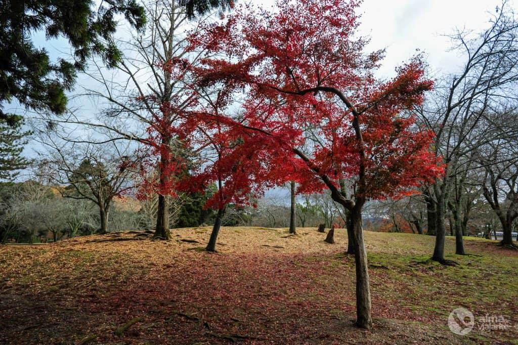 Parque de Nara, Japão