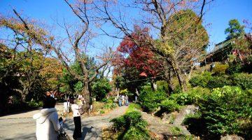 15 coisas imperdíveis para fazer em Tóquio (a minha lista)