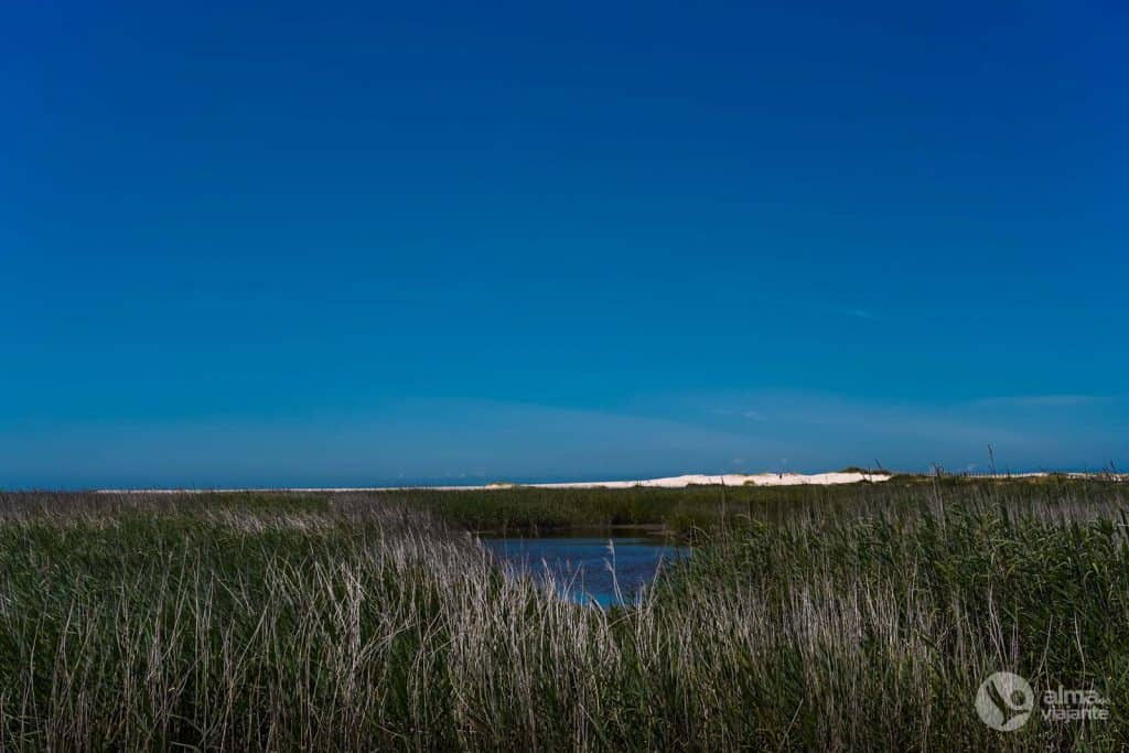 Caniço: Fauna e flora na Lagoa da Paramos