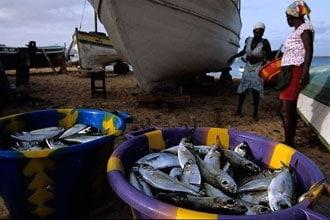 Os mares de Cabo Verde são ricos em peixe