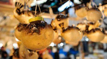Uma manhã no mercado Tsukiji, o maior mercado de peixe do mundo