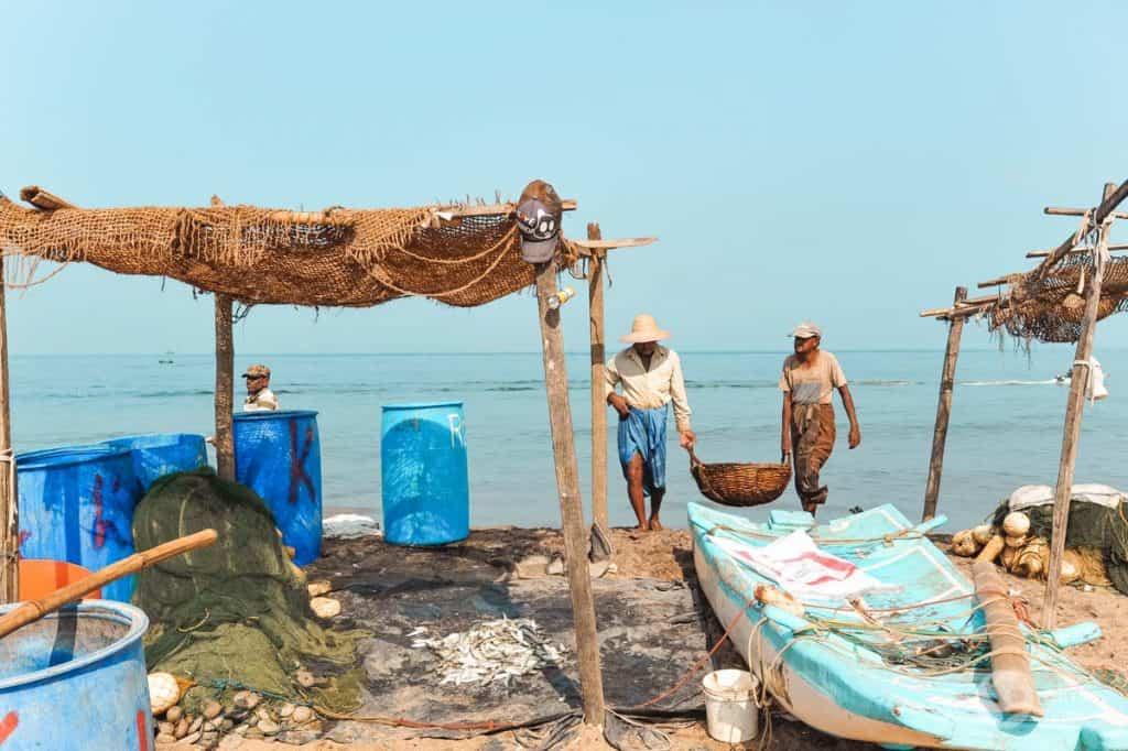 Mercado de peixe, Negombo, Sri Lanka