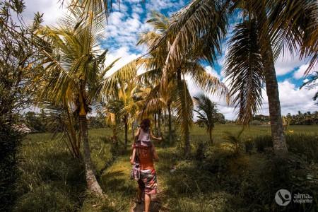 Visitar Ubud: arrozais