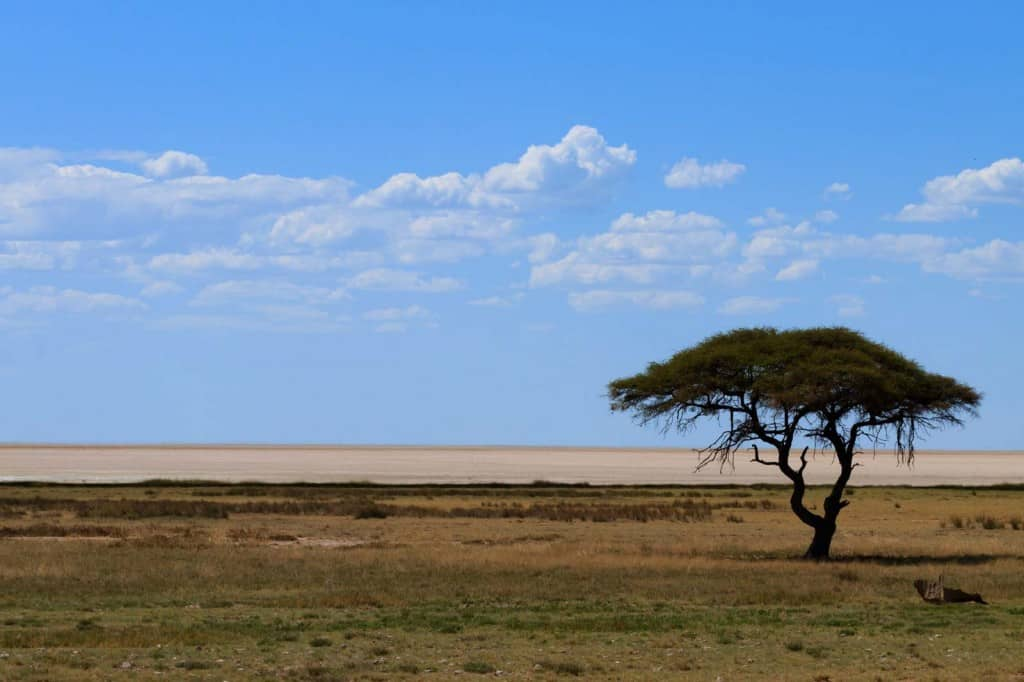 Planície no Parque Nacional Etosha