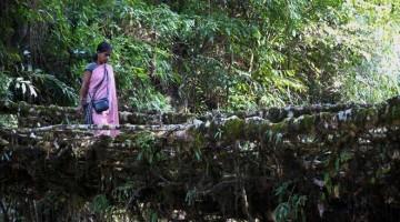 Živi mostovi, Meghalaya