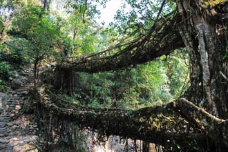 Living Bridges Meghalaya