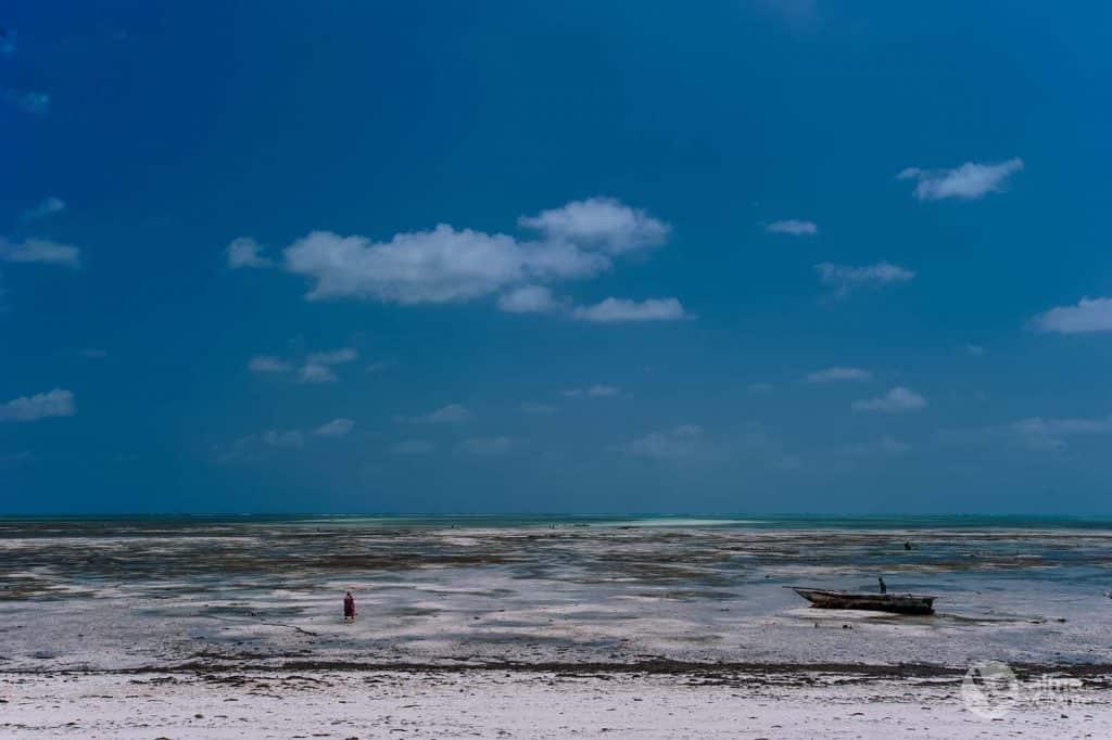 Plantation d'algues à Zanzibar