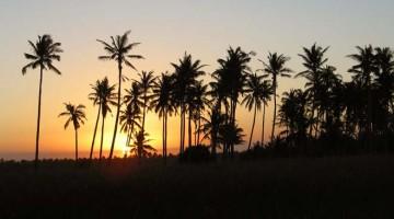 Praia do Tofo, à sombra das casuarinas