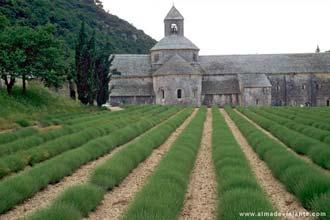 Abadia de Sénanques