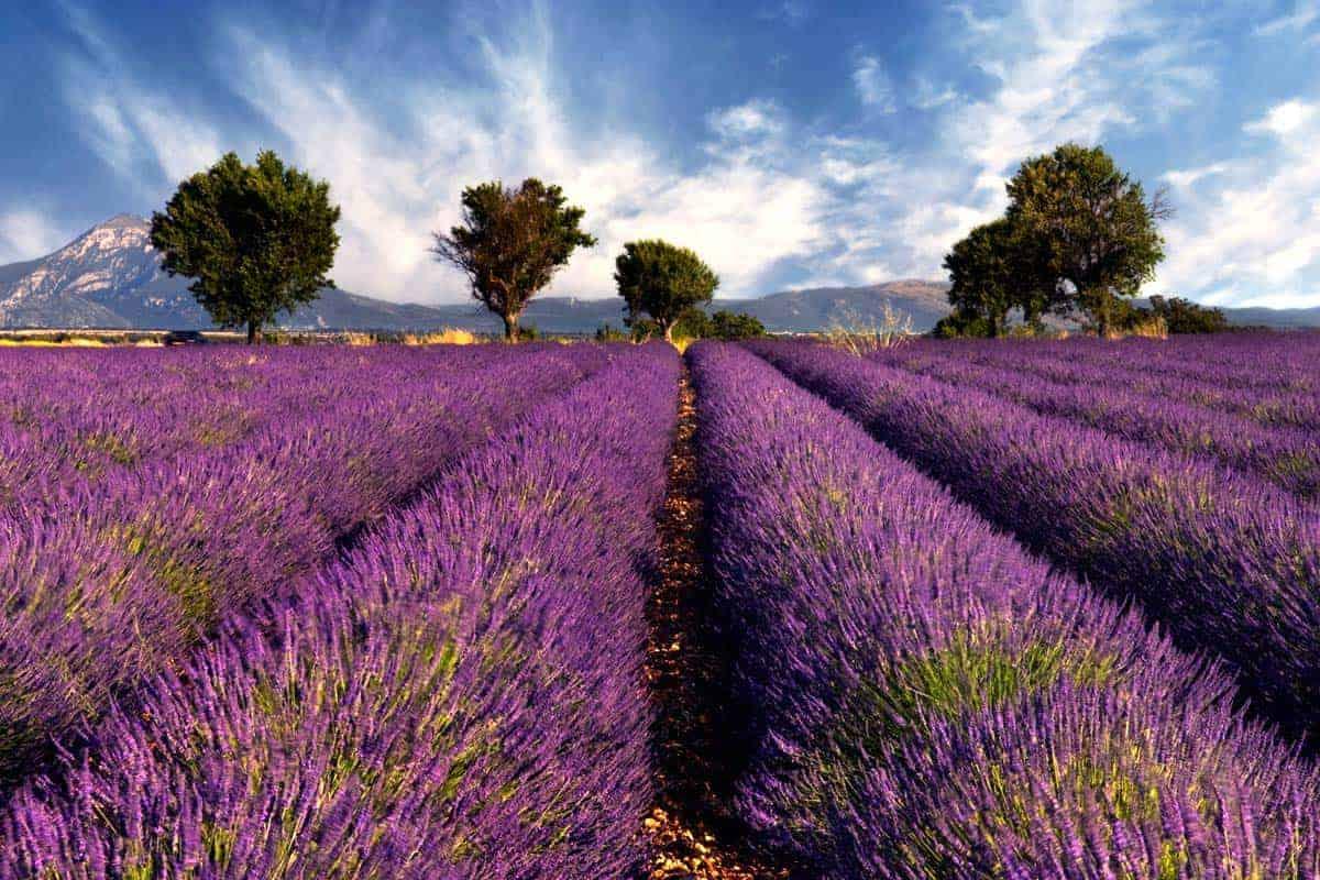 Visitar Provença, França